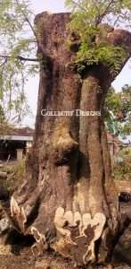 Tamarind wood is also known as Assam wood