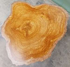 Teak wood burl coffee table by Collectif Designs delivered to client in Singapore